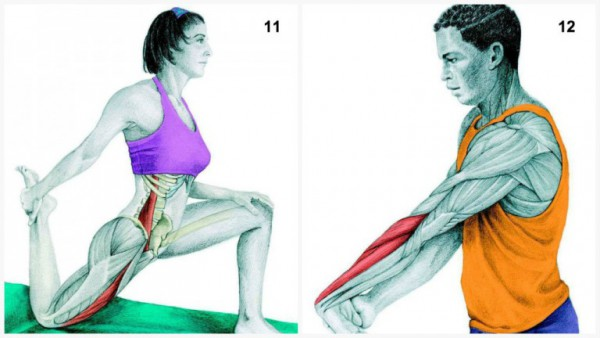 36-pictures-to-see-which-muscle-youre-stretching6-600x338