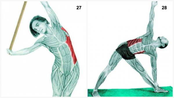 36-pictures-to-see-which-muscle-youre-stretching14-600x338