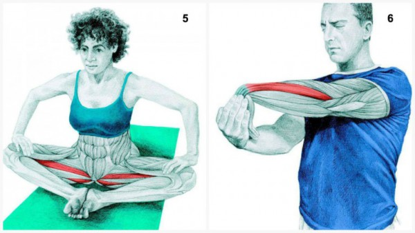 36-pictures-to-see-which-muscle-youre-stretching3-600x338